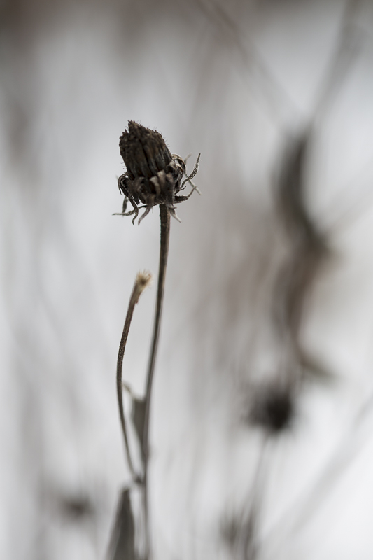 02_02_morbide_pflanzen