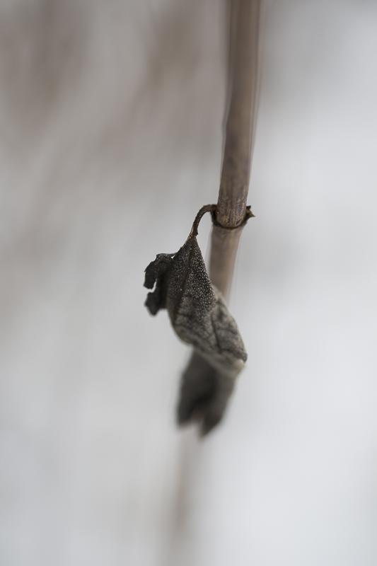 02_03_morbide_pflanzen
